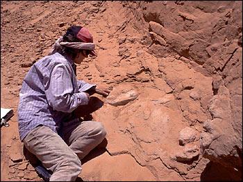 dinosaurs gobi desert