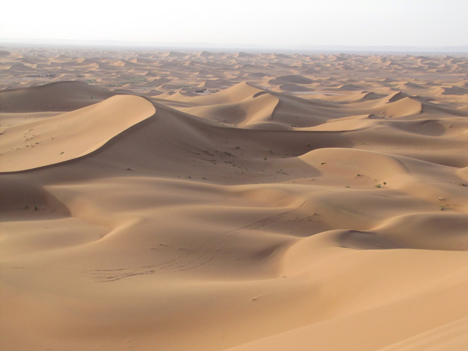 Sands of the Sahara Desert