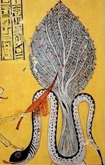 Apophis Sycamore Tree