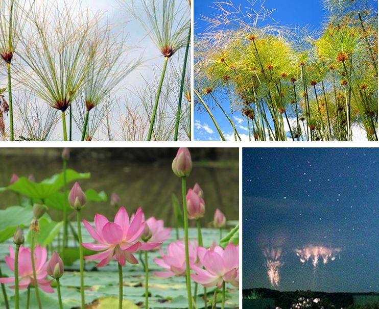 comparison between lotus flowers and electrical sprites